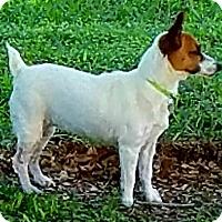 Adopt A Pet :: AVA - adopted - Terra Ceia, FL