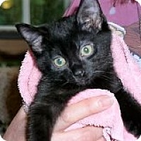 Adopt A Pet :: Winnie - Middletown, CT
