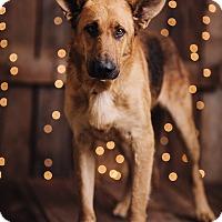 Adopt A Pet :: Ken - Portland, OR
