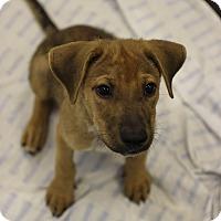 Adopt A Pet :: Canoli - Jupiter, FL
