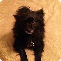 Adopt A Pet :: Patron - conroe, TX