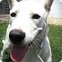 Adopt A Pet :: Clare - Harmony, Glocester, RI