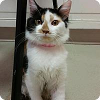 Adopt A Pet :: Merideth - Decatur, AL