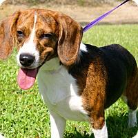 Adopt A Pet :: Joie de Vivre!!! - Ft Myers Beach, FL