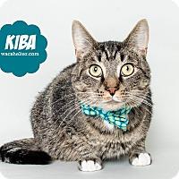 Adopt A Pet :: Kiba - Wyandotte, MI