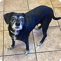 Adopt A Pet :: Rena 107339 - Joplin, MO
