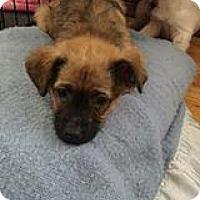 Adopt A Pet :: Chickaleta - Racine, WI