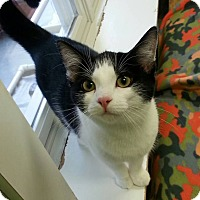 Adopt A Pet :: Julia - Shinnston, WV