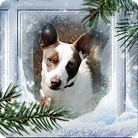 Adopt A Pet :: TOMMY - Crowley, LA