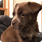 Adopt A Pet :: Pete (The Little Rascals)