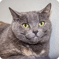 Adopt A Pet :: Cloudy - Martinsville, IN
