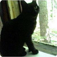 Adopt A Pet :: Lottie - Portland, ME
