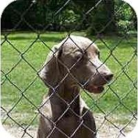 Adopt A Pet :: Sara  **ADOPTED** - Eustis, FL