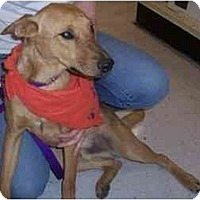 Adopt A Pet :: Dorito - Scottsdale, AZ