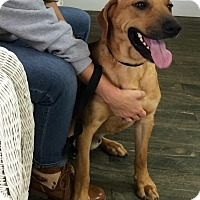 Adopt A Pet :: Buckley - Boston, MA