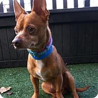Adopt A Pet :: Andy - Lakeland, FL