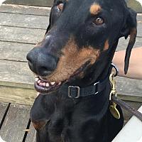 Adopt A Pet :: Monroe - Houston, TX