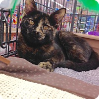 Adopt A Pet :: Nala - Redondo Beach, CA