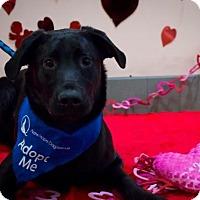 Adopt A Pet :: Ducky - Saskatoon, SK