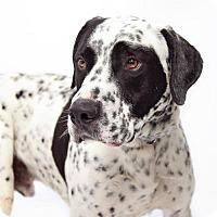Adopt A Pet :: Bandit - Santa Monica, CA