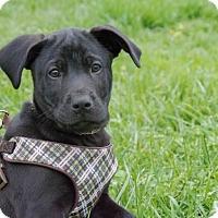 Adopt A Pet :: Roosevelt $250 - Seneca, SC