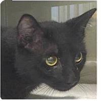 Adopt A Pet :: Joe - Springdale, AR