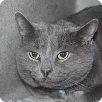Adopt A Pet :: Diver (foster care) - Philadelphia, PA