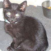 Adopt A Pet :: Santee - Colorado Springs, CO