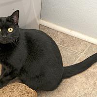 Adopt A Pet :: Maddie - Waynesville, NC