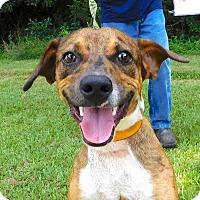 Adopt A Pet :: Danny - St. Francisville, LA