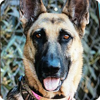 Adopt A Pet :: LARA VON LANGENAU - Los Angeles, CA