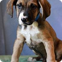 Adopt A Pet :: Aldo - Waldorf, MD