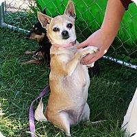 Adopt A Pet :: Chuka - Aurora, IL