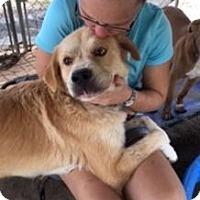 Adopt A Pet :: Sammi - Quinlan, TX