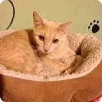 Adopt A Pet :: Buffy - Bridgeton, MO