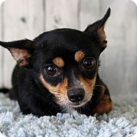 Adopt A Pet :: AJ - Waldorf, MD