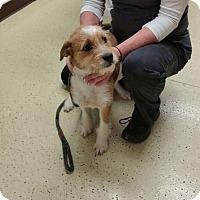 Adopt A Pet :: Mila - Newport, KY