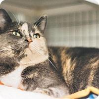 Adopt A Pet :: Jasmine - Parma, OH