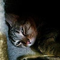Adopt A Pet :: Versace - Bloomingdale, NJ