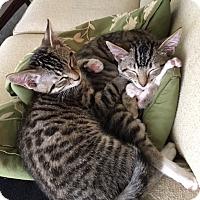 Adopt A Pet :: Willie - Pasadena, CA