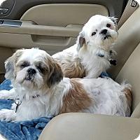 Adopt A Pet :: Plum & Grover - Humble, TX