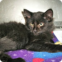 Adopt A Pet :: Mac - Flint, MI