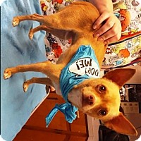 Chihuahua Mix Dog for adoption in Raleigh, North Carolina - Tigger