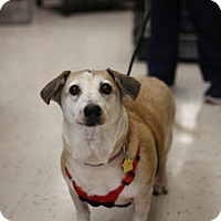 Adopt A Pet :: Lady - Olive Branch, MS