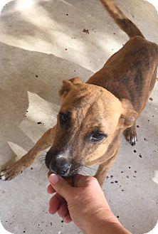 Shepherd (Unknown Type) Mix Dog for adoption in Von Ormy, Texas - Prince