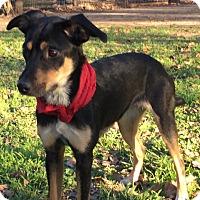 Adopt A Pet :: Kimmie - Saddle Brook, NJ