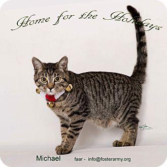 Bengal Kitten for adoption in Riverside, California - Michael