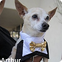 Chihuahua Mix Dog for adoption in Lake Forest, California - Arthur