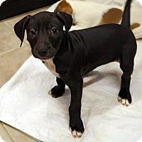 Adopt A Pet :: Hildy - Union, CT