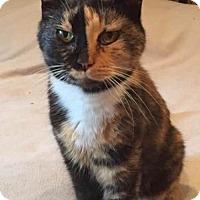 Adopt A Pet :: Poppy - Asheville, NC